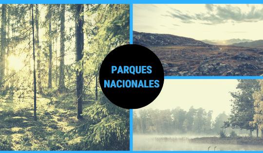 Existen 30 parques nacionales en Suecia donde puedes disfrutar de la naturaleza sueca en todo su esplendor.